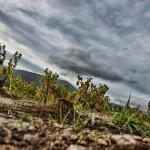 Melkan-Bassil au Domaine Monts et Merveilles
