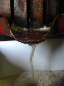 Jus du précieux Sauvignon Blanc de Mille Ponts